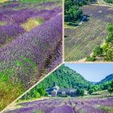 Collage de la lavanda delante del abbaye de Senanque en Provence Fotos de archivo
