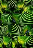 Collage de la luz verde Imagen de archivo libre de regalías
