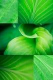 Collage de la macro de la hoja Fotografía de archivo libre de regalías