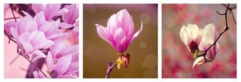 Collage de la magnolia Fotos de archivo libres de regalías