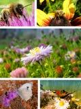 Collage de la naturaleza Imagen de archivo libre de regalías