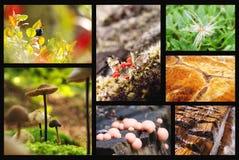 Collage de la naturaleza Imagenes de archivo