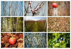 Collage de la naturaleza Fotos de archivo