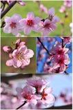 Collage de la primavera imagen de archivo libre de regalías
