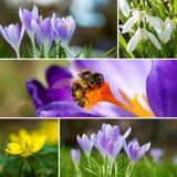 Collage de la primavera Foto de archivo libre de regalías