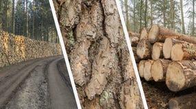 Collage de la silvicultura - industria de la madera - corte y apiló el árbol Trun imágenes de archivo libres de regalías