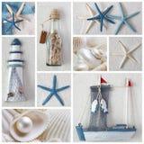 Collage de las estrellas de mar Imagenes de archivo