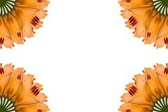 Collage de las flores hermosas anaranjadas del lirio en un fondo blanco fotografía de archivo libre de regalías
