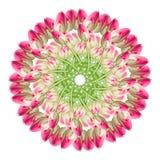 Collage de las flores hermosas rosadas del tulip?n en un fondo blanco fotos de archivo
