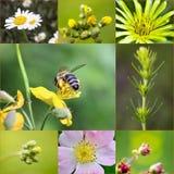 Collage de las flores de la primavera en prado Fotografía de archivo libre de regalías