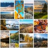 Collage de las fotos de la naturaleza fotografía de archivo libre de regalías