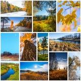 Collage de las fotos de la naturaleza imágenes de archivo libres de regalías