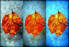 Collage de las hojas de otoño congeladas en el hielo imágenes de archivo libres de regalías