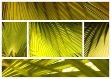 Collage de las hojas de palma Foto de archivo