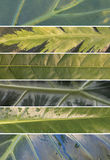 Collage de las hojas de plantas tropicales fotografía de archivo