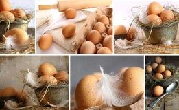 Collage de las imágenes de los huevos marrones Imagenes de archivo