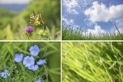 Collage de las imágenes del verano Imágenes de archivo libres de regalías