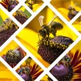 Collage de las imágenes occidentales de Honey Bee - fondo del viaje y x28; mi phot Imágenes de archivo libres de regalías