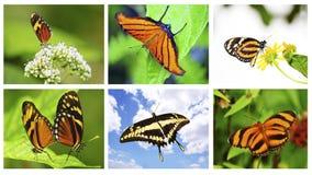 Collage de las mariposas Fotos de archivo libres de regalías
