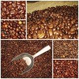 Collage de las mezclas de los granos de café Imagen de archivo