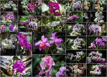 Collage de las orquídeas foto de archivo libre de regalías