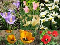 Collage de las primeras flores de la primavera Foto de archivo libre de regalías