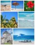 Collage de las zonas tropicales Imagen de archivo libre de regalías