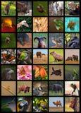 Collage de los animales Imagen de archivo libre de regalías