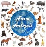 Collage de los animales del campo stock de ilustración