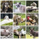 Collage de los animales del campo Foto de archivo libre de regalías