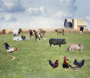 Collage de los animales del campo Foto de archivo