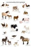Collage de los animales del campo en español Foto de archivo libre de regalías