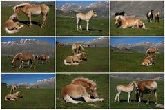 Collage de los caballos Imagen de archivo libre de regalías
