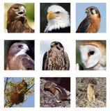 Collage de los depredadores y de la presa Imágenes de archivo libres de regalías