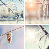 Collage de los fondos de la naturaleza del invierno Foto de archivo libre de regalías