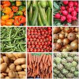 Collage de las verduras frescas Fotos de archivo libres de regalías