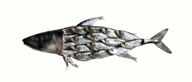 Collage de los pescados imagen de archivo
