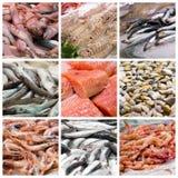 Collage de los pescados y de los mariscos Fotos de archivo libres de regalías