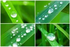 Collage de los símbolos de la naturaleza Foto de archivo libre de regalías