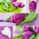 Collage de los tulipanes Foto de archivo libre de regalías
