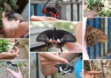 Collage de mariposas Imagen de archivo