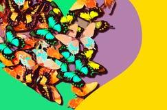 Collage de mariposas coloridas dentro de una forma del corazón en un fondo brillante Fotos de archivo
