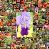 Collage de muchas flores Fotos de archivo libres de regalías