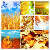 Collage de nature d'automne Image libre de droits