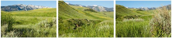 Collage de prés de montagne d'herbe verte Image stock
