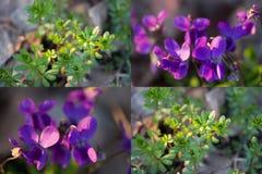 Collage de quatre images image libre de droits