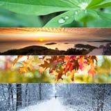 Collage de quatre saisons Image libre de droits