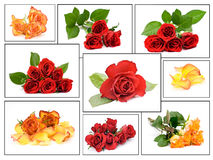 Collage de rosas imagen de archivo