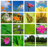 Collage de source et de nature Image libre de droits