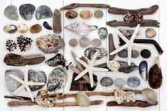 Collage de trésor de bord de la mer Photographie stock